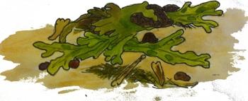 Seaweed4b350