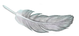 Feather3lightx300